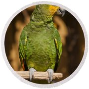 Orange-winged Amazon Parrot Round Beach Towel by Adam Romanowicz