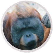Orangutan Kiss Round Beach Towel