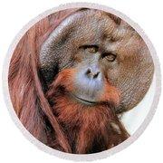 Orangutan Male Closeup Round Beach Towel