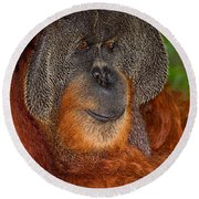 Orangutan Male Round Beach Towel
