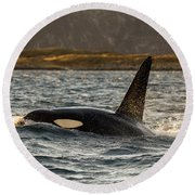 Orca #3 Round Beach Towel