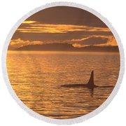 Orca Killer Whale Round Beach Towel