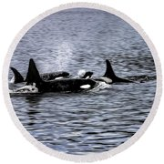 Orcas, The Killer Whales Round Beach Towel