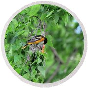 Orchard Oriole Feeding The Kids Round Beach Towel