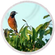 Orchard Oriole Songbird Perched On A Bush Round Beach Towel
