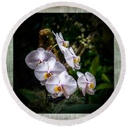 Orchid 1 Triptych Round Beach Towel