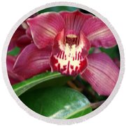 Orchid 10 Round Beach Towel