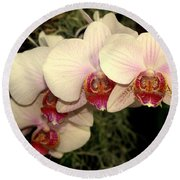 Orchid 19 Round Beach Towel