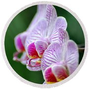 Orchid 30 Round Beach Towel