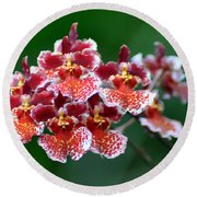Orchid 31 Round Beach Towel