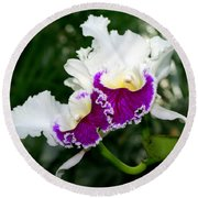 Orchid 6 Round Beach Towel