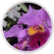 orchid 942 Purple Brassolaeliocattleya  Round Beach Towel