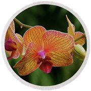 Orchid Aliveness Round Beach Towel