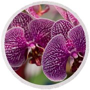 Orchid Ascda Laksi Round Beach Towel