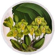 Orchid, Bifrenaria Aurantiaca, 1891 Round Beach Towel