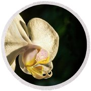 Orchid Bloom Round Beach Towel
