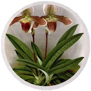 Orchid, C. Ashburtonioe Superbum, 1891 Round Beach Towel