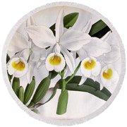 Orchid, C. Eldorado Virginalis, 1891 Round Beach Towel