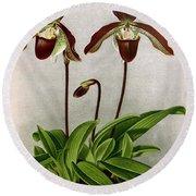 Orchid, C. Oenanthum Superbum, 1891 Round Beach Towel