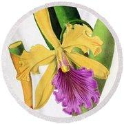 Orchid, Cattleya Dowiana, 1880 Round Beach Towel