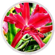 Orchid Cattlianthe Hybrid Round Beach Towel