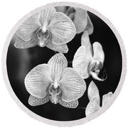 Orchid Cluster Close-up Round Beach Towel