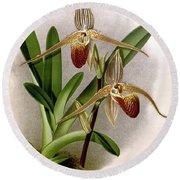 Orchid, Cypripedium Elliottianum, 1891 Round Beach Towel