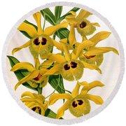 Orchid, Dendrobium Chrysotis, 1891 Round Beach Towel