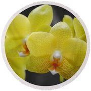 Orchid Family Round Beach Towel