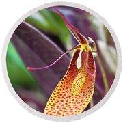 Orchid Flower - Restrepia Radulifera Round Beach Towel