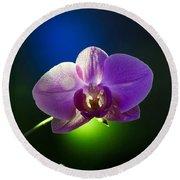 Orchid Flower On Black Background Round Beach Towel