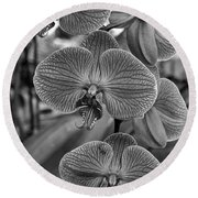Orchid Glory Black And White Round Beach Towel