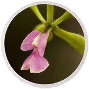 Orchid In Bloom Round Beach Towel