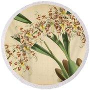 Orchid Odontoglossum Andersonianum Grenada  Round Beach Towel