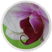 Orchid On Green Round Beach Towel