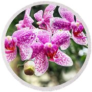 Orchid Phalaenopsis Carnival Bonsall Round Beach Towel