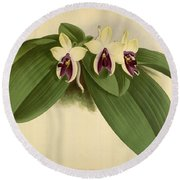 Orchid Phalaenopsis Violacea Singapore  Round Beach Towel
