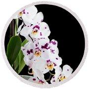 Orchid Phalaenopsis White Flower Round Beach Towel