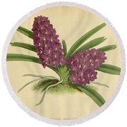 Orchid Saccolabium Ampullaceum  Round Beach Towel