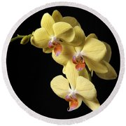 Orchid Set Against Black. Round Beach Towel