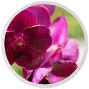 Orchid Vanda Ratchaburi Waxy Red Round Beach Towel