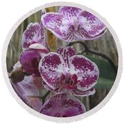 Orchid With Purple Patches Round Beach Towel