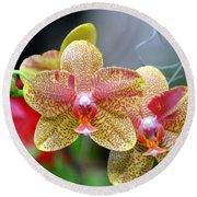Orchids 35 Round Beach Towel