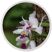 Orchids On A Tree Round Beach Towel