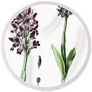 Orchis Militaris, The Military Orchid Round Beach Towel