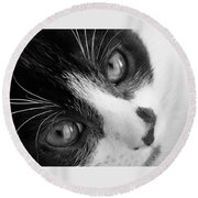 Oreo In Black And White Round Beach Towel