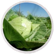 Organic White Cabbage  Round Beach Towel