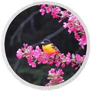 Oriole On Crabapple Round Beach Towel