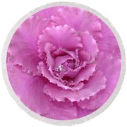 Ornamental Cabbage With Raindrops - Square Round Beach Towel