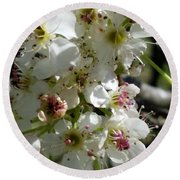 Ornamental Pear Round Beach Towel